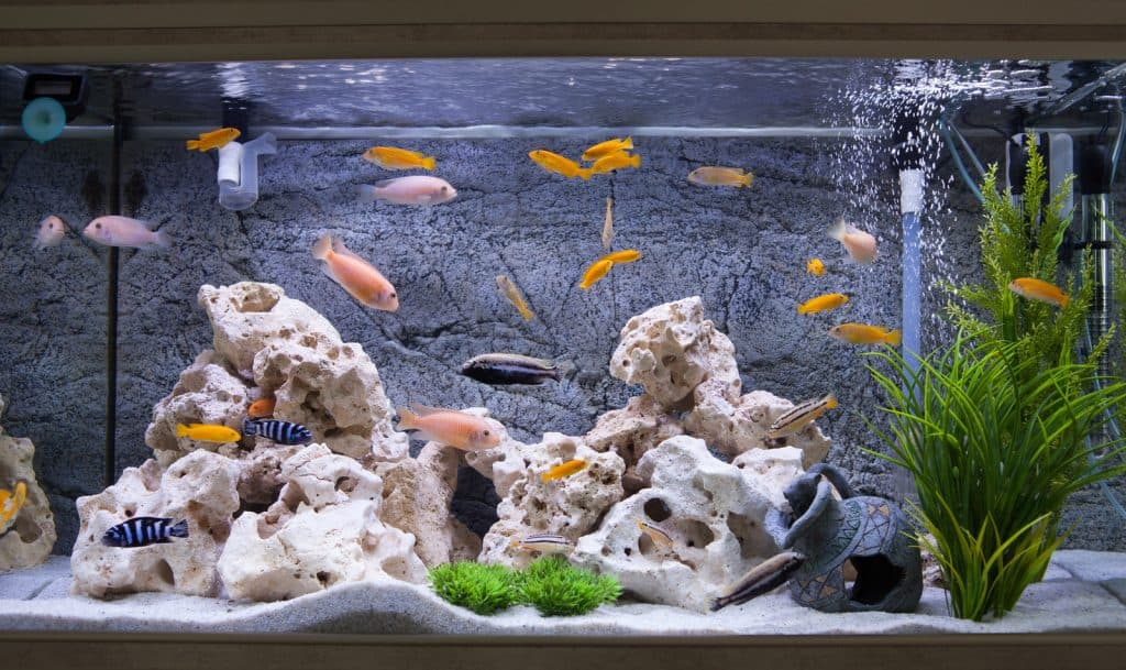 How to Raise KH in a Freshwater Aquarium