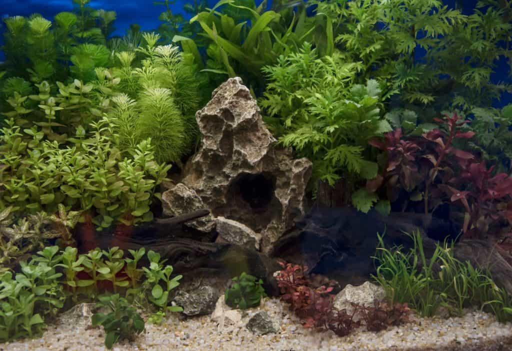How Long to Leave Lights on in a Planted Aquarium