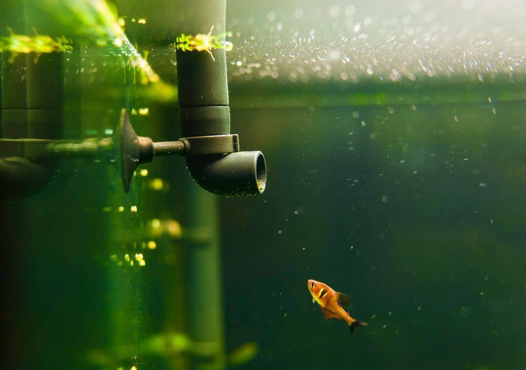 How to Fix a Leaking Aquarium Without Draining it