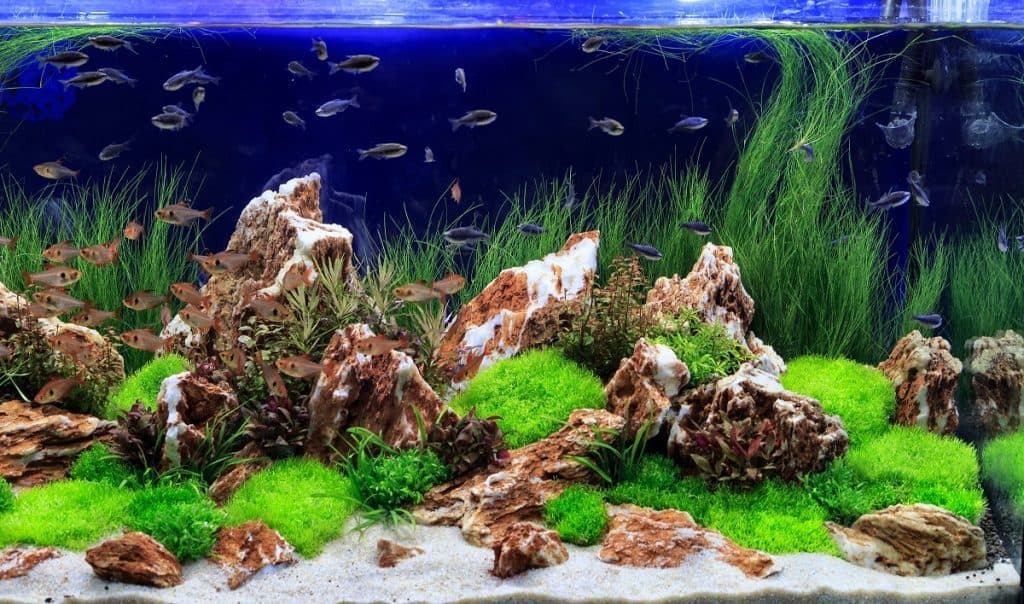 How to Lower GH in a Freshwater Aquarium