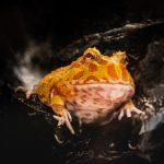 Are Frogs Reptiles