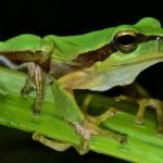 Best Name Ideas for Baby Frogs