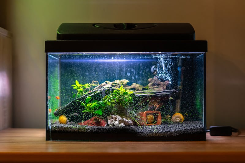 How Much Gravel Does My Fish Tank Need