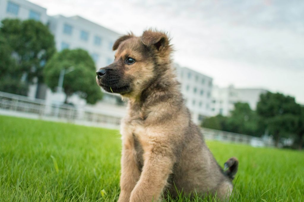 What Is The Best Dog Repellent For Lawn
